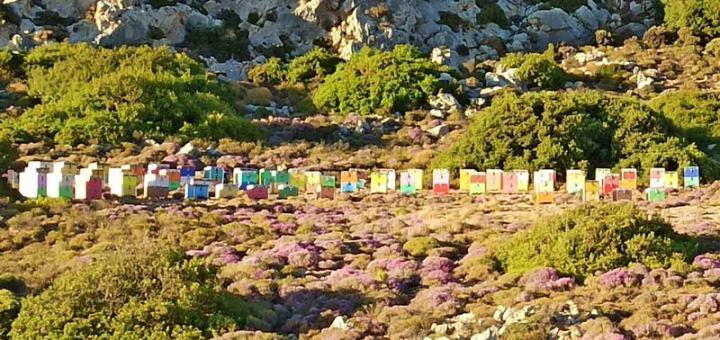 Ο ΥπΑΑΤ ενεργοποιεί δράσεις για τη στήριξη της μελισσοκομίας