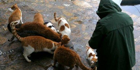 πρωινό για γάτες.....