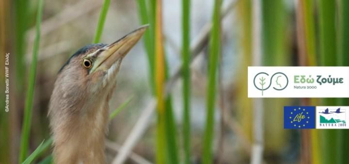 Ευρωπαϊκή Ημέρα Natura 2000: Μια γιορτή για την προστασία της φύσης