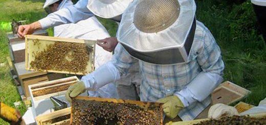 Πρόληψη και αντιμετώπιση των ασθενειών της Μέλισσας