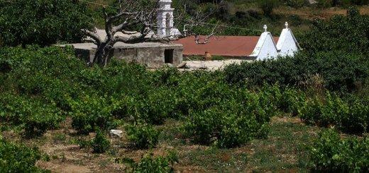 Πανήγυρη Ιερού Ναού Αγίου Νικήτα στον Μπέμπονα