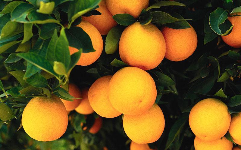 πολλά τα φρούτα που επλήγησαν από το ρωσικό εμπάργκο