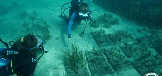αναδάσωση των θαλάσσιων λιβαδιών Ποσειδωνίας
