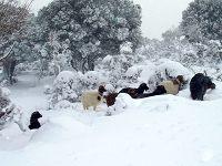Χιονισμένο τοπίο και πρόβατα