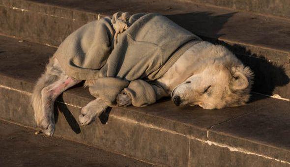 Αύξηση των εγκαταλείψεων ζώων συντροφιάς στη Σητεία