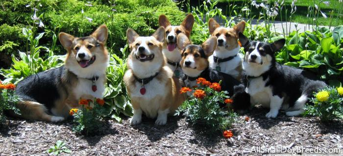 I eventually got over all that at around 13, and now all I pretty much do is talk about the corgi puppy/ies Rich Husband and I will have.