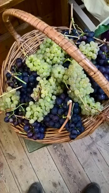 A valuable basket of grapes!