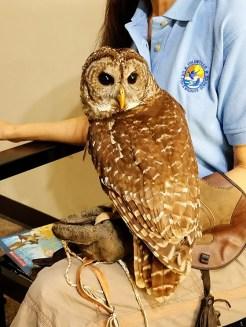 Owl at Wichita Wildlife Refuge Welcome Center