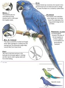 Macaw Keygen
