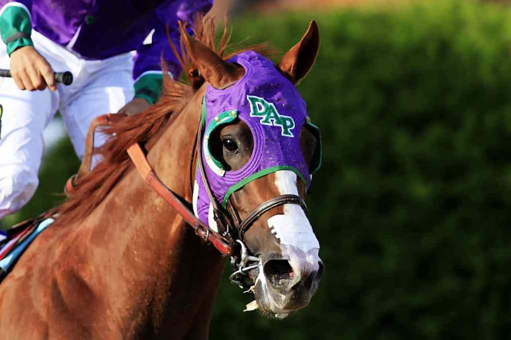 race horse wearing nasal strips