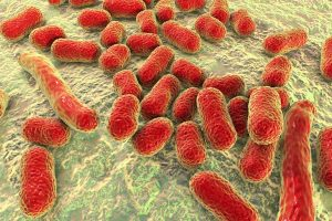 Image result for superbugs in hospitals