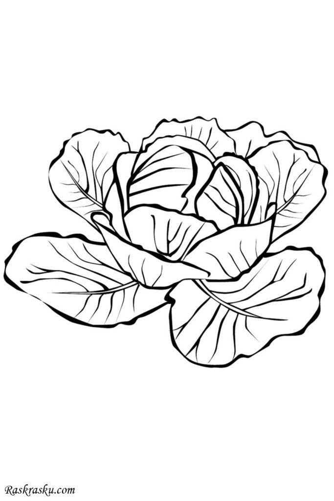 Colorear Verduras Para Y Dibujos Colorear Frutas Verduras Auto