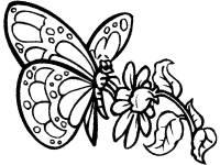 Dibujos de mariposas bonitas para colorear