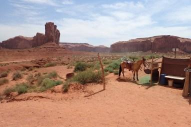 John Wayne's horse