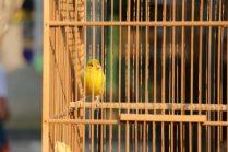 le marché aux oiseaux