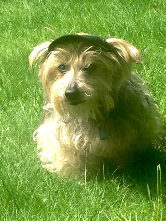 buddy sunshine