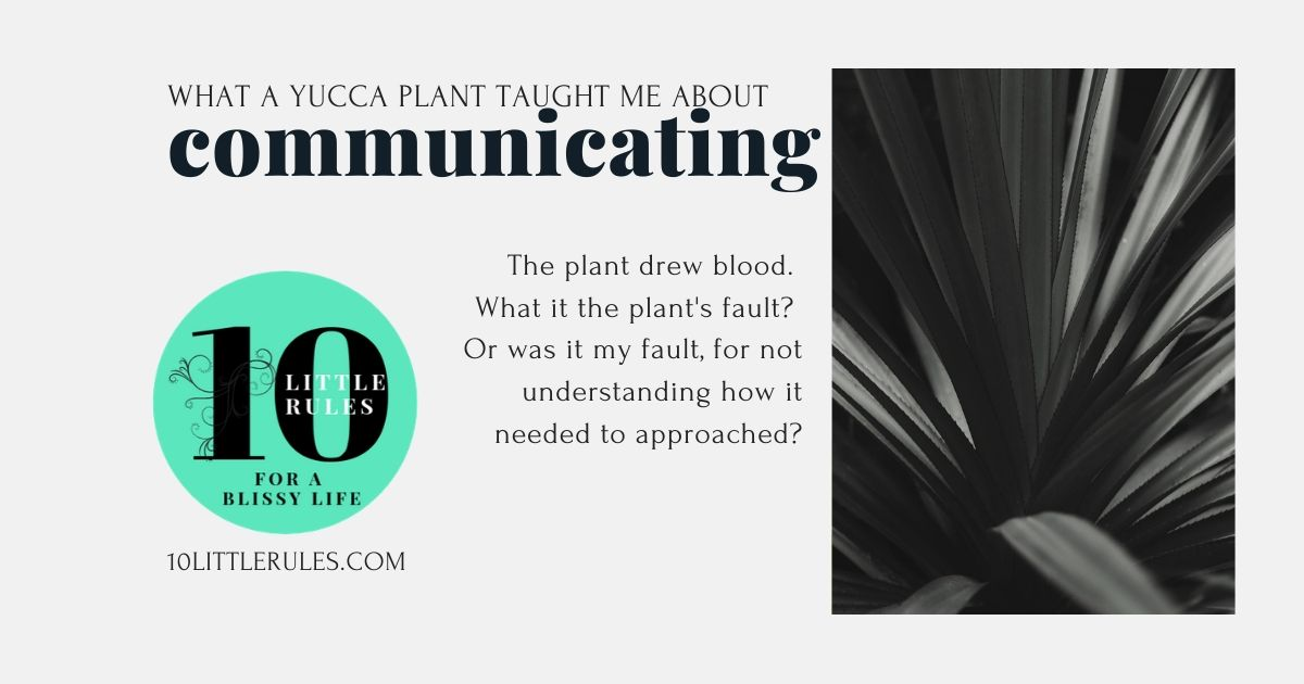 What a yucca plant taught me about communicating
