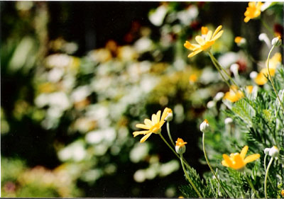 070414FE-01flower.jpg