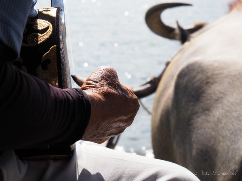 西表島 由布島 水牛車