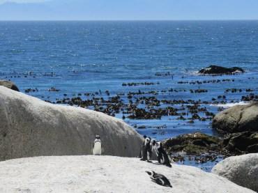 10milesbehindme_penguins10