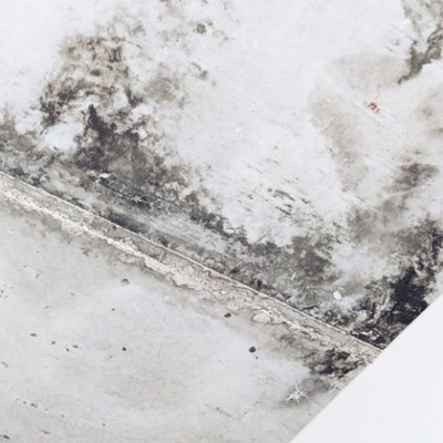 Tips on How to Hire the Best Mold Removal Company