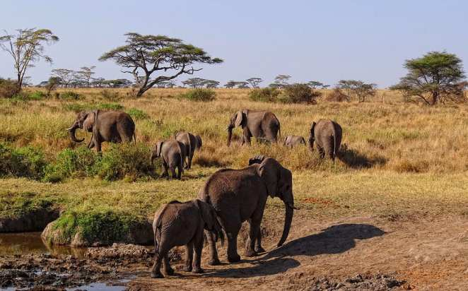 Most Famous Natural Landmarks In Africa: Serengeti National Park, Tanzania