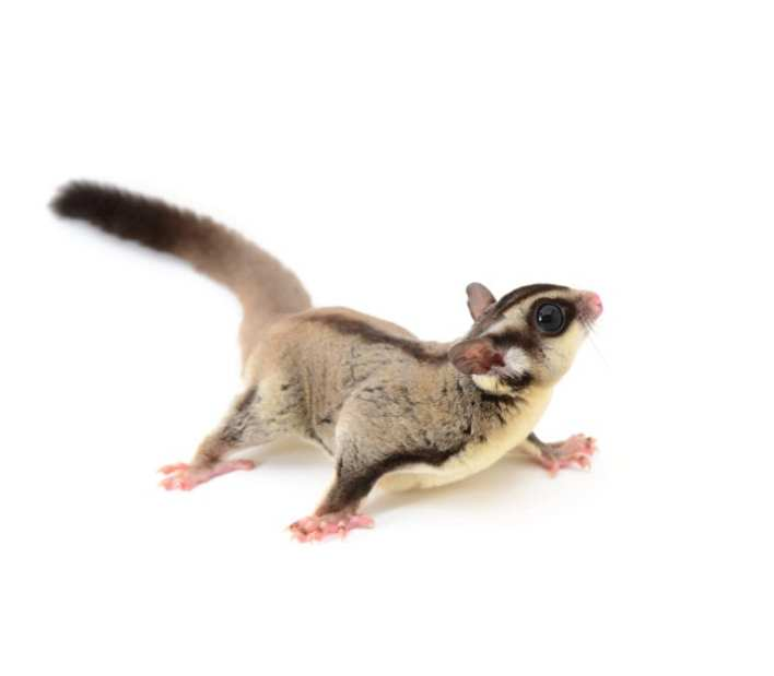 Most Exotic Pets