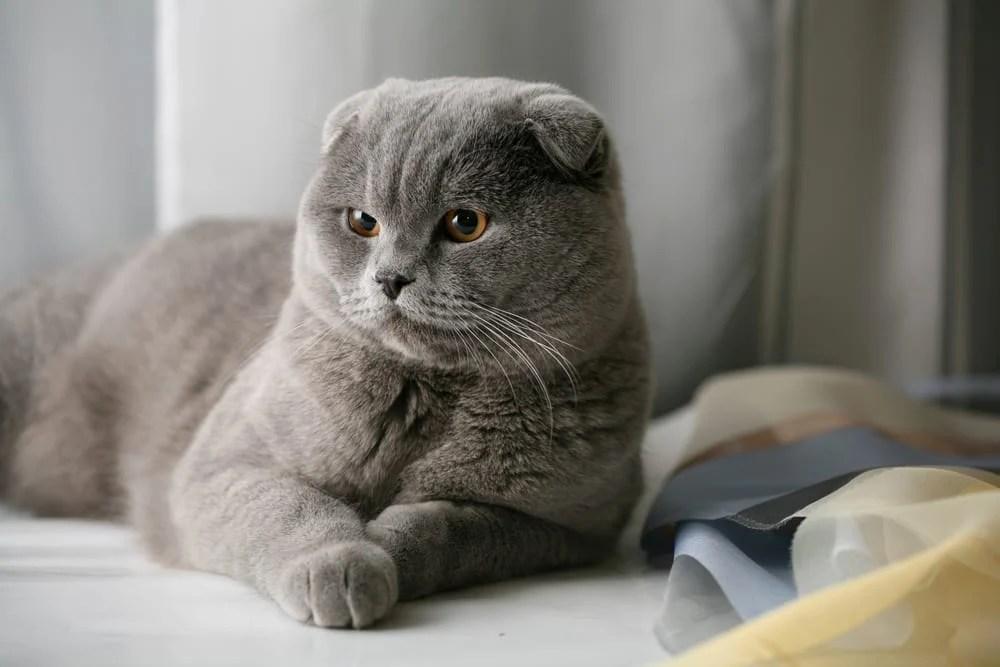 world s 10 cutest