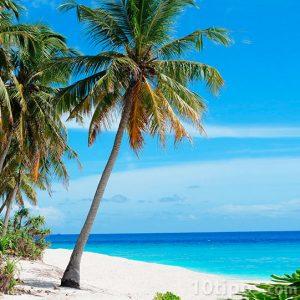 Güneş dolu sahilde palmiye ağacı