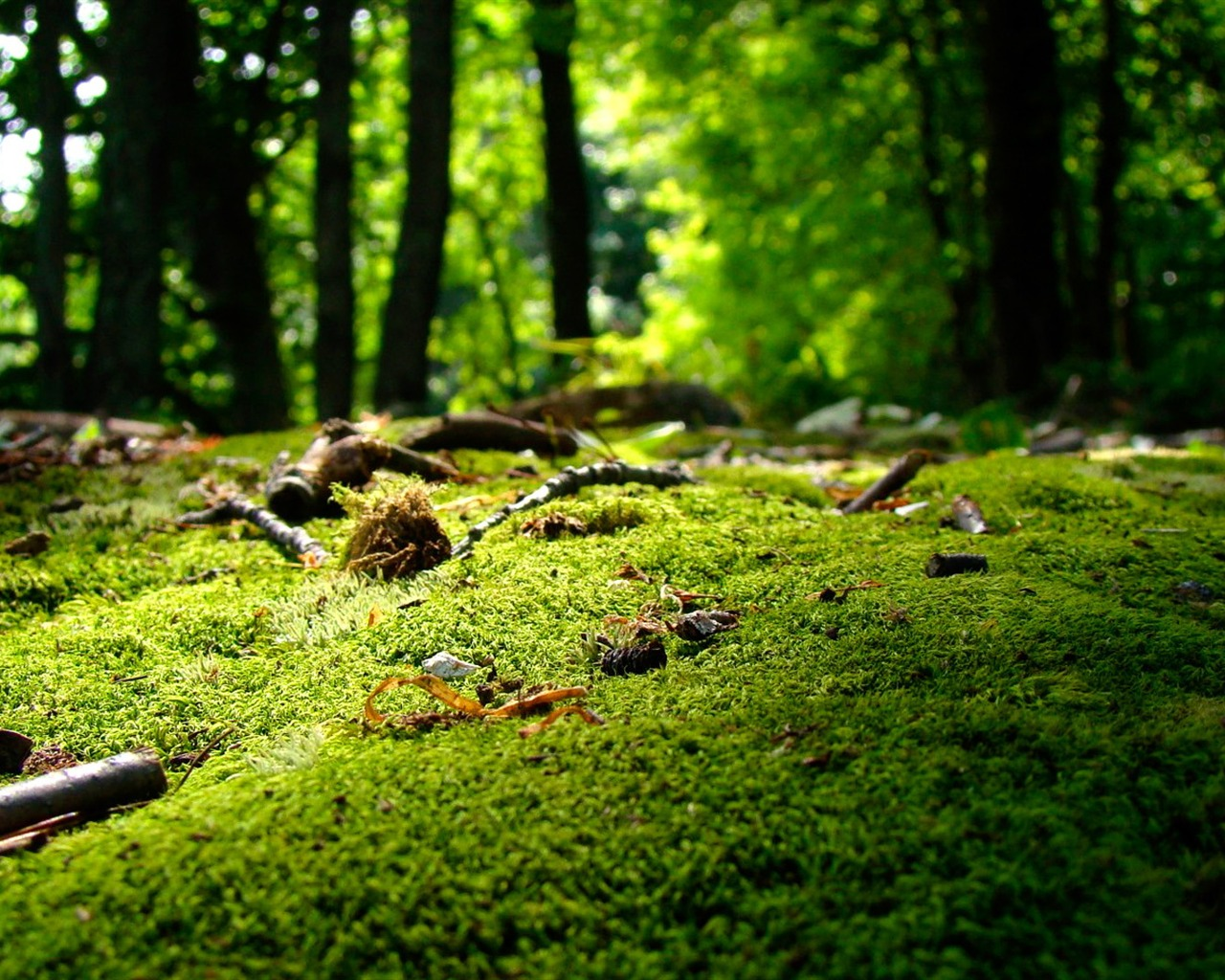 nature forestlandscape photo wallpapers Preview