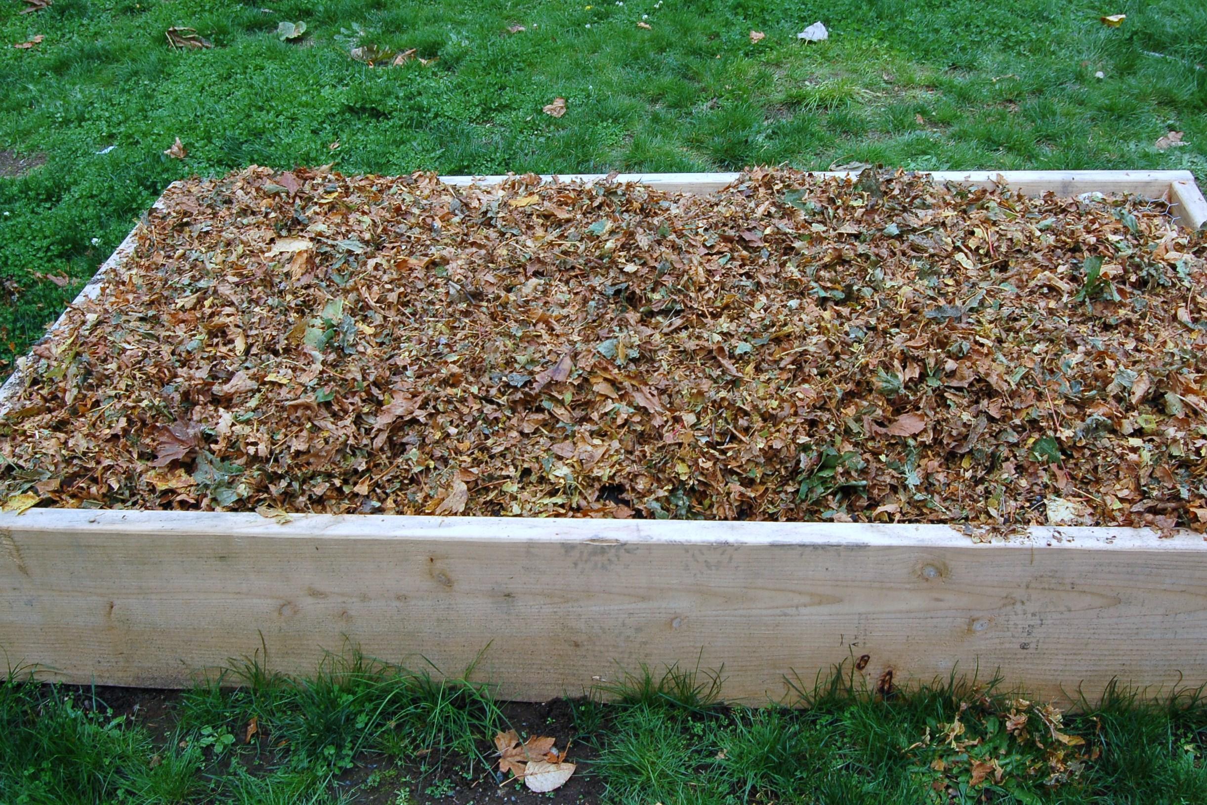 Leaf mulch in raised beds