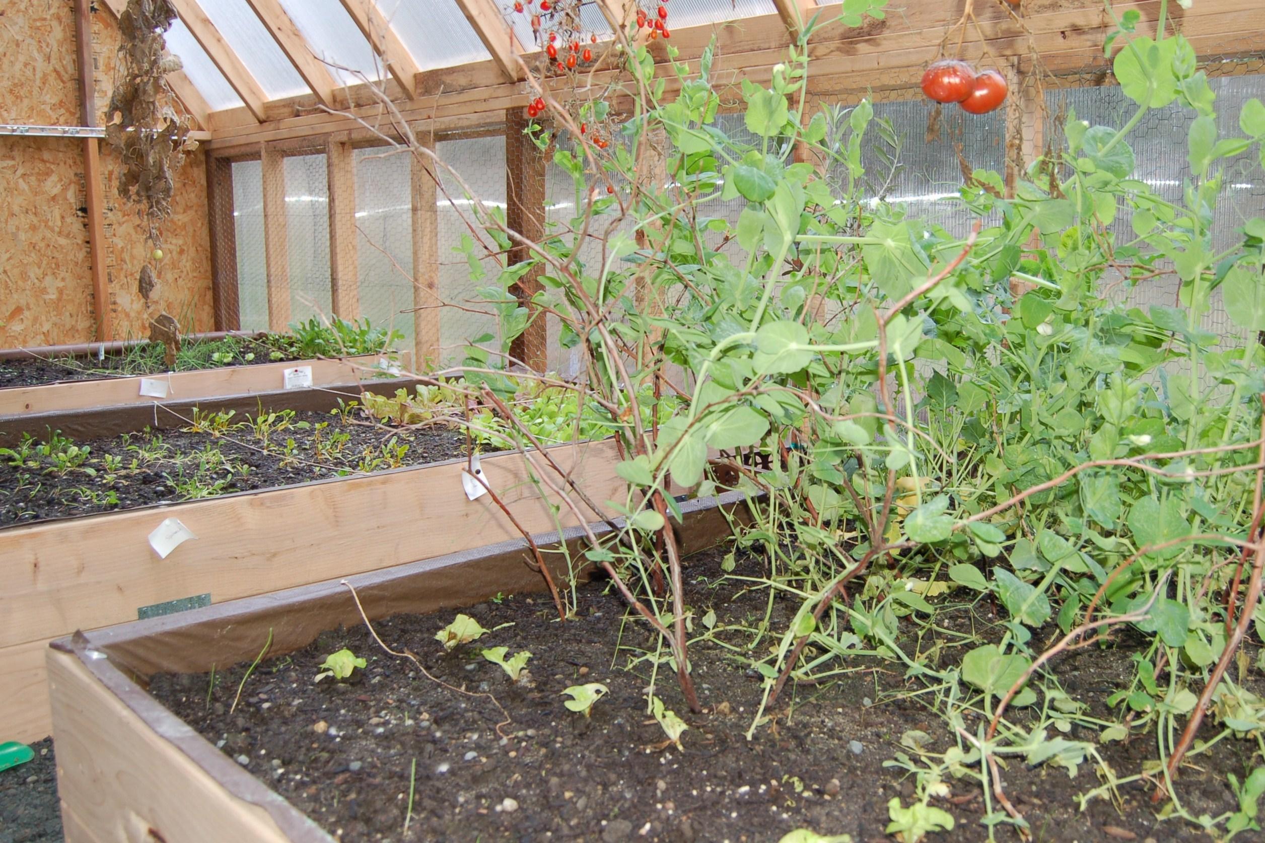 Greenhouse in November