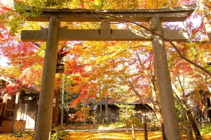 蓮華寺の紅葉