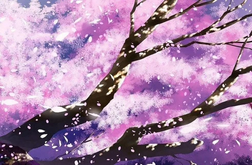Anime Petals Video & Meditation