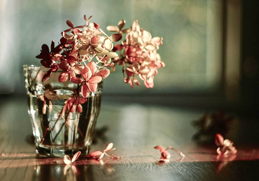 Susan Licht - Still Life Photographer from Massachusetts