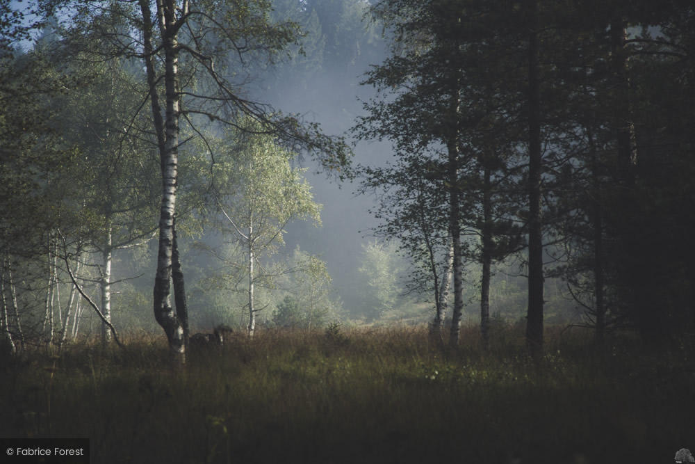 Photographing trees and forests sounds simple, but making a good image of a forest can be surprisingly challenging. Interview With European Landscape Photographer Fabrice Forest 121clicks Com