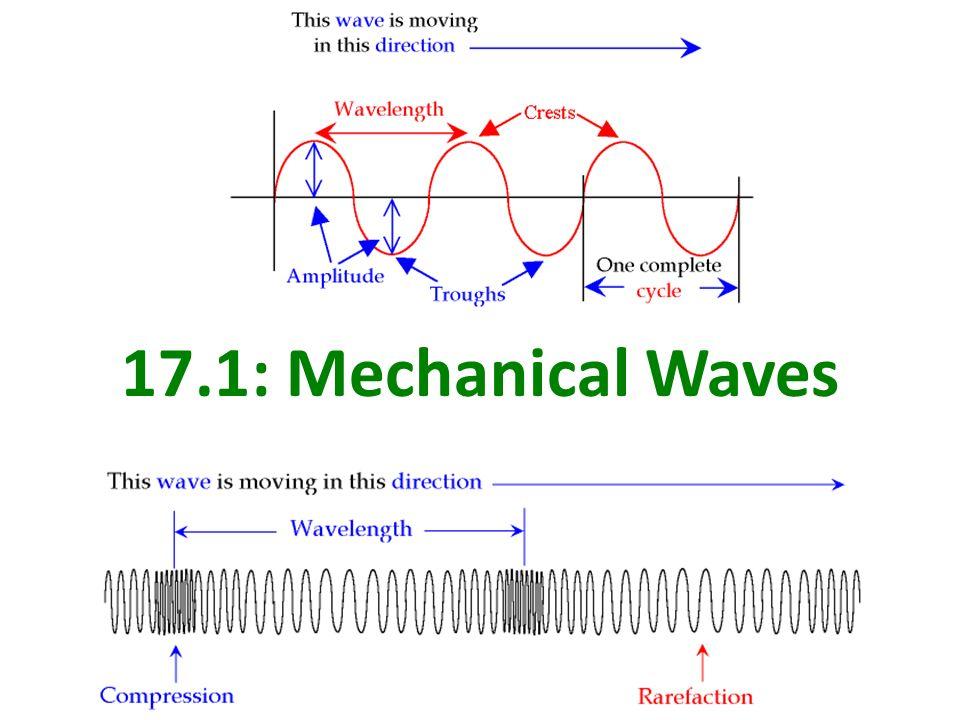 mechanical wave diagram polar bear fur waves of life 1234567rjr