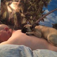 Hundauflegen gegen Krebs in meiner Kolumne Juli