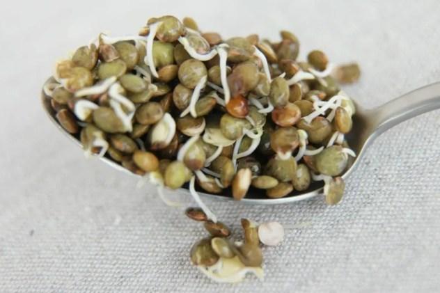 réussir ses graines germées