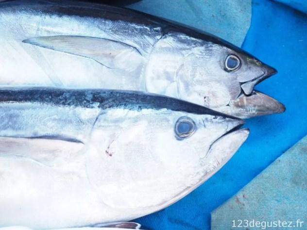 thon rouge et pêcheur de thon