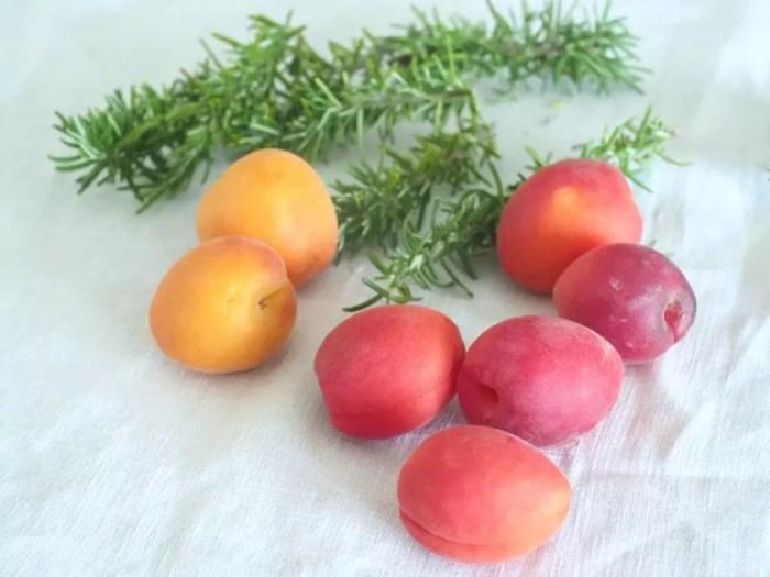 compote d'abricots frais au romarin
