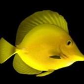 Fish Free 3d Model