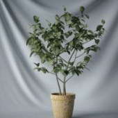 Interior Small Tree