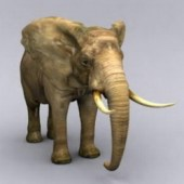 Elephant Free 3dmax Model