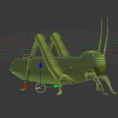 Grasshopper Rigged