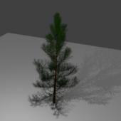 Christmas (pine) Tree 1