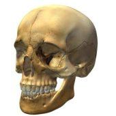 Skull V3