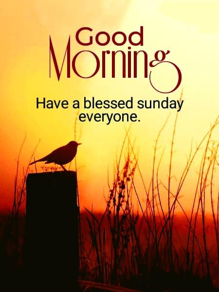 Good morning Sunday hd images