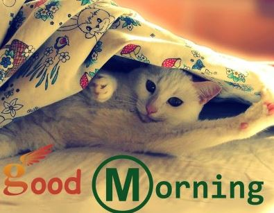 Cute Cheer Wallpapers Cat Good Morning Gif Images Animated Wallpapers Download