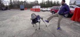 chien-robot-google